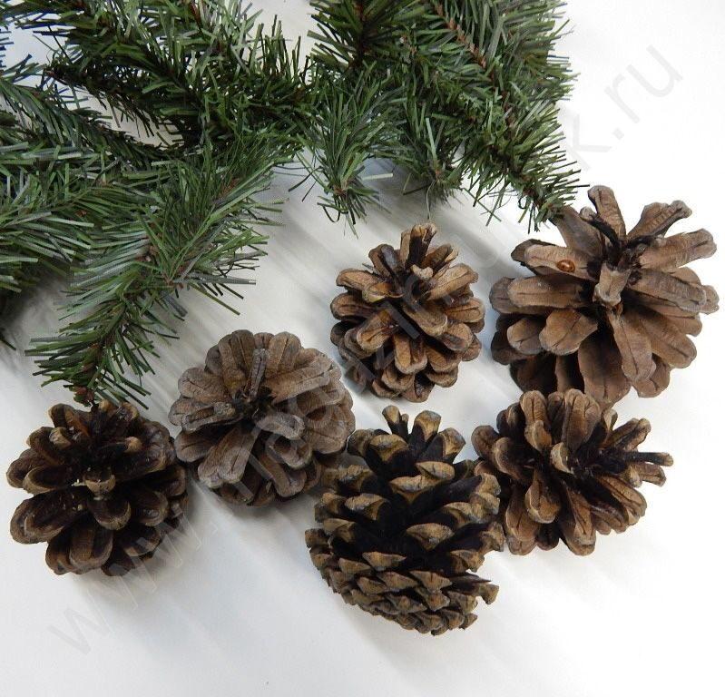 Шишки большие сосновые  для новогоднего украшения